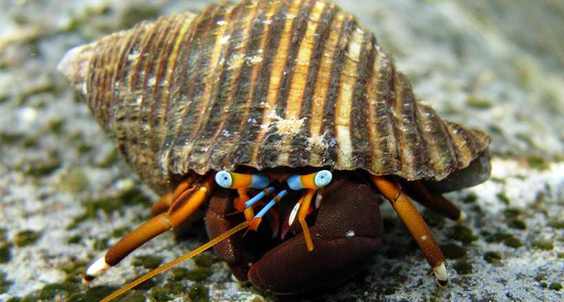Recherche appartement ou maison près de la plage : les Bernard-l'hermite