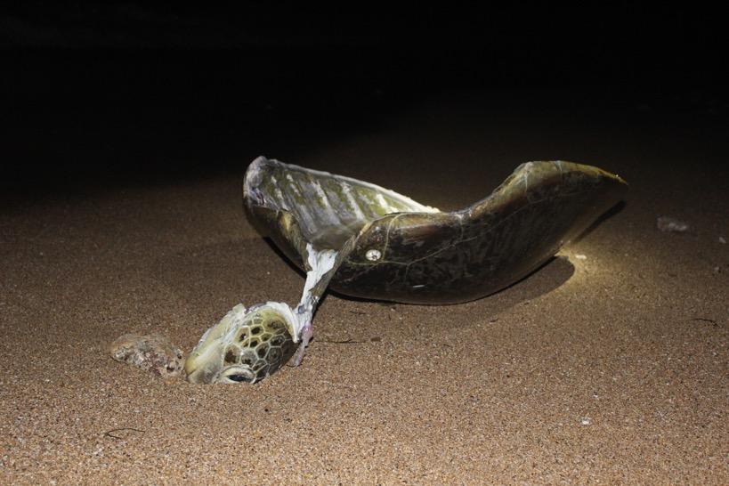 Pris en flagrant délit, des braconniers attaquent un garde tortue à Mayotte