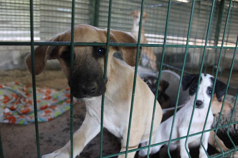 Protection animale à Mayotte : « Quand on s'en prend comme ça à des chiens, c'est qu'on n'a plus de limites »