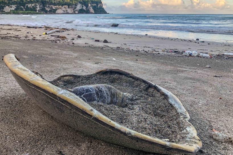 Protection des tortues à Mayotte : une affaire d'environnement, et l'affaire de tous