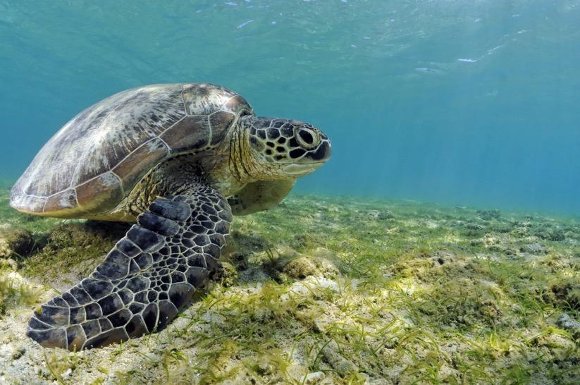 """""""Le lagon de Mayotte est extraordinaire, il faut faire les choses correctement pour qu'il le reste"""""""
