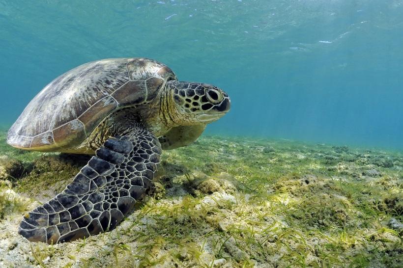 Un centre de soins des tortues marines bientôt créé à Mayotte