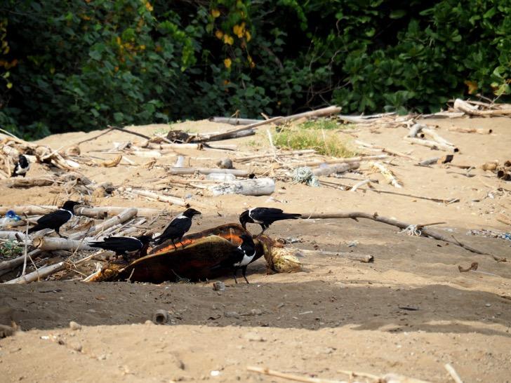 Mayotte : les braconniers de Papani condamnés à deux ans de prison ferme en appel
