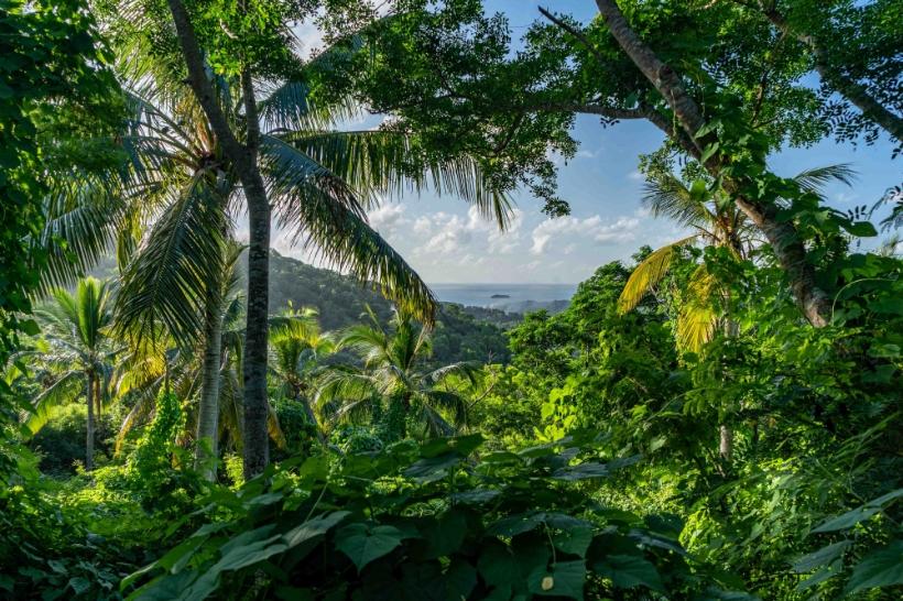 Et si la réponse à la crise de l'eau à Mayotte se trouvait… dans les arbres ?