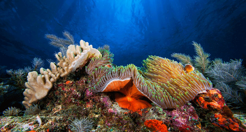 La vérité sur l'affaire Nemo