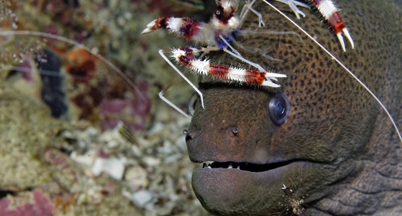Animaux du Lagon | Nettoyeurs des mers, une profession bien précaire