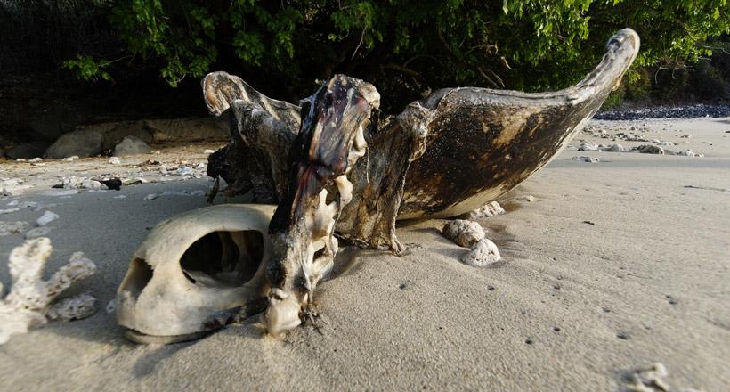 Un braconnier de tortues interpellé à Kani-Keli