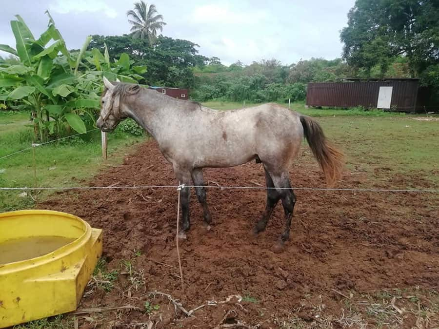 drole-de-manege-au-centre-equestre-dhajangua