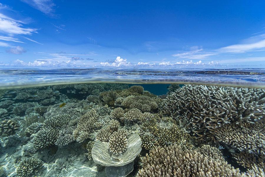 journee-mondiale-ocean-40-millions-euros-recherche-francaise