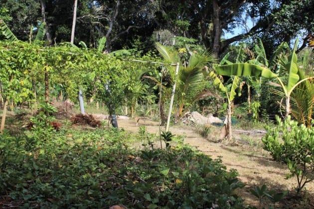 agriculture-barakani-espèces-végétales