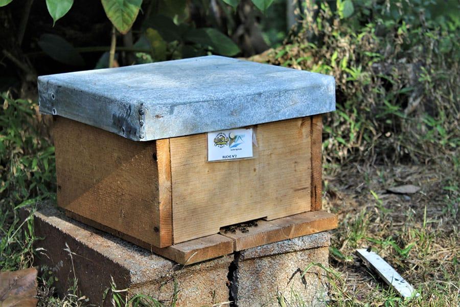 abeille-mahoraise-perle-rare-grand-potentiel