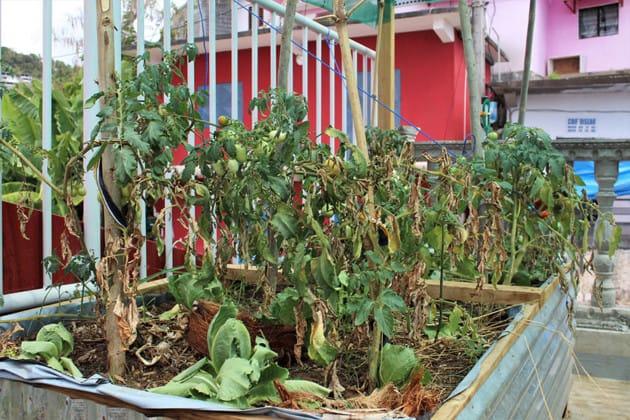 sada-terrasses-se-mettent-au-vert